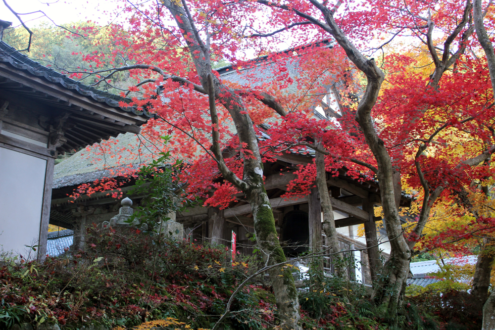 瓦屋禅寺の紅葉(1)