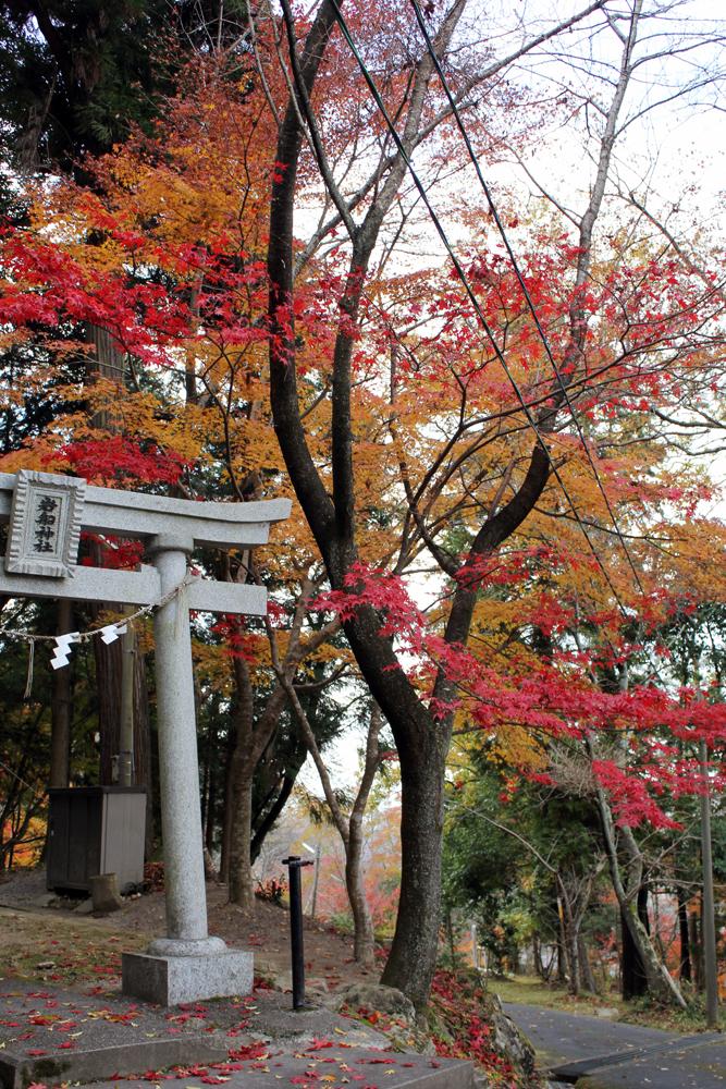 猪子山公園の紅葉