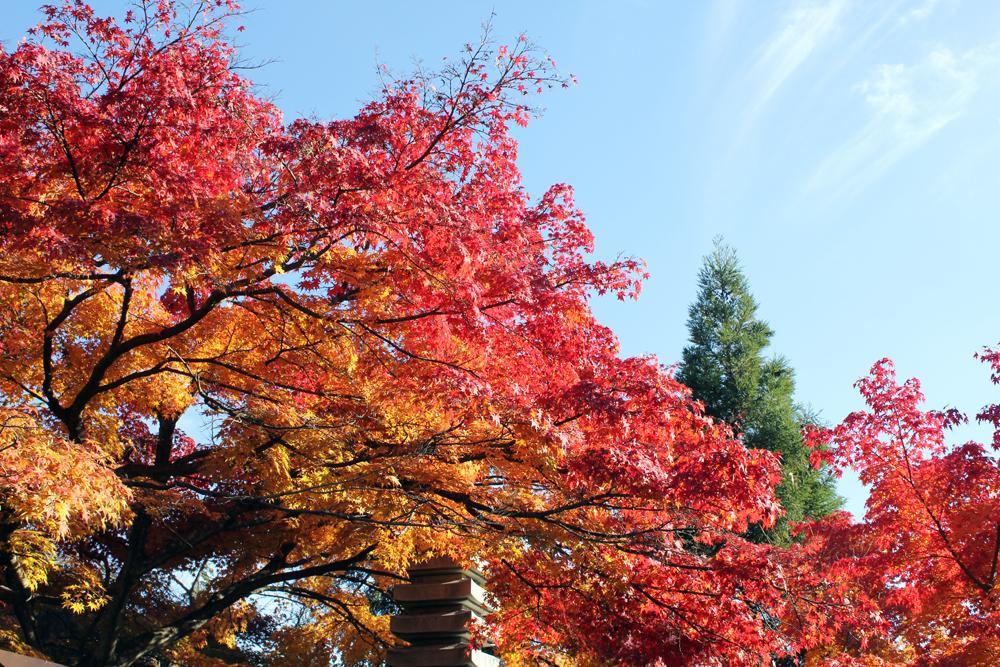 瓦屋禅寺の紅葉(2)