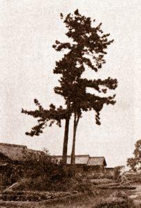 お鍋松(昭和40年代)