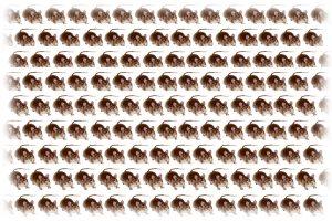 ネズミの大群(イメージ)