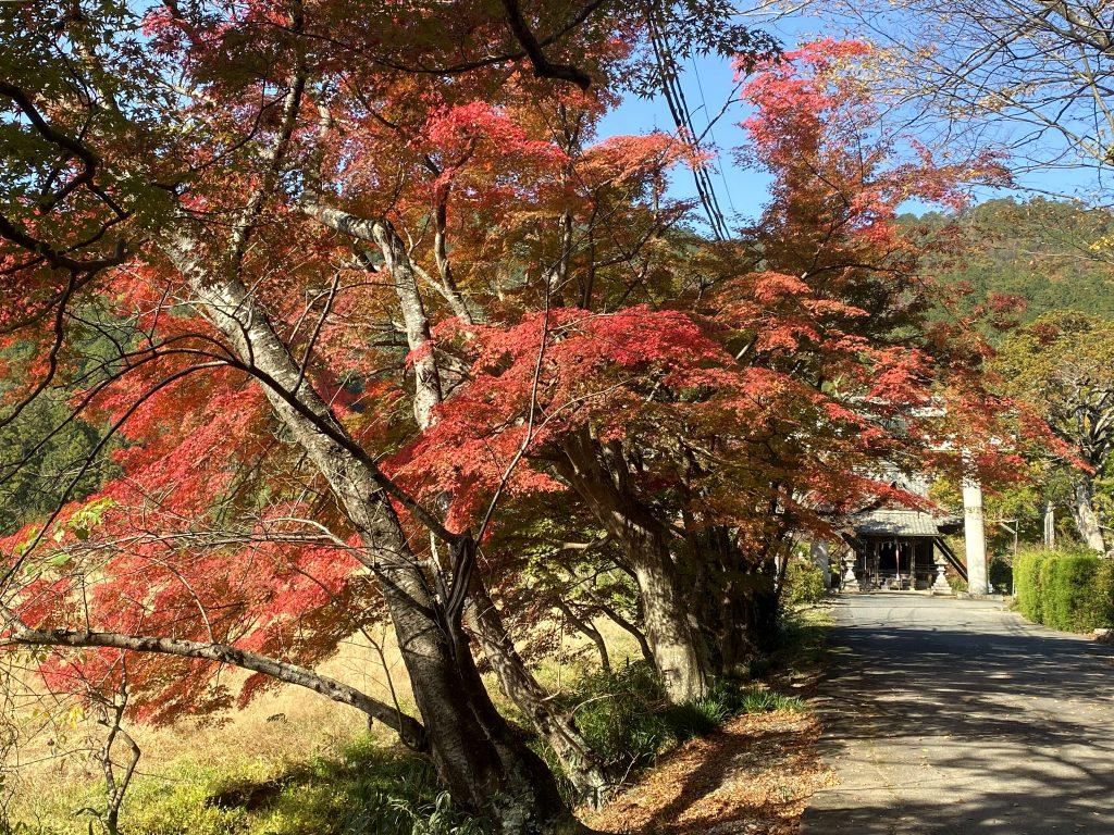 荒神山神社里宮参道の紅葉
